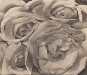 Tina Modotti - Roses, Mexico