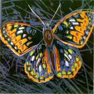 Warhol - Butterfly
